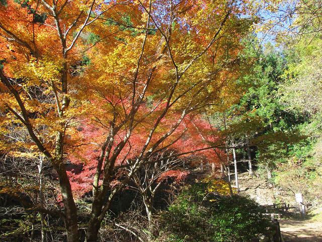 画像3: 11月の山旅会 都民の森から槙寄山 ツアーの下見に行ってきました!