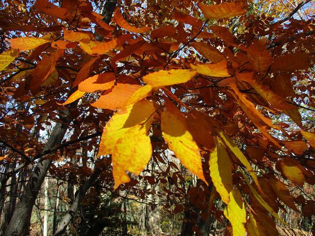 画像10: 11月の山旅会 都民の森から槙寄山 ツアーの下見に行ってきました!