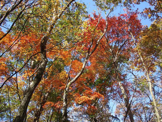 画像11: 11月の山旅会 都民の森から槙寄山 ツアーの下見に行ってきました!