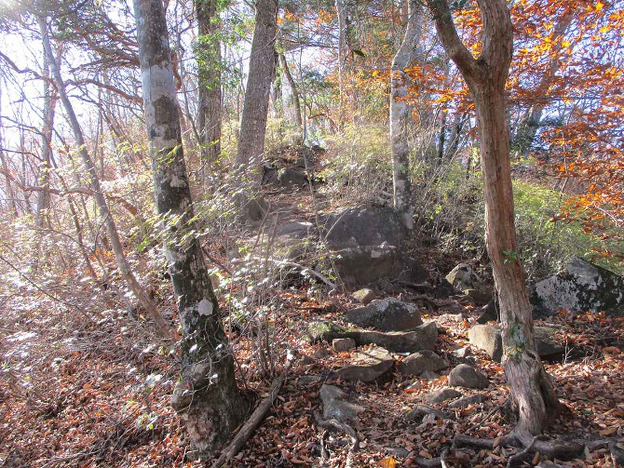 画像5: 11月の山旅会 都民の森から槙寄山 ツアーの下見に行ってきました!