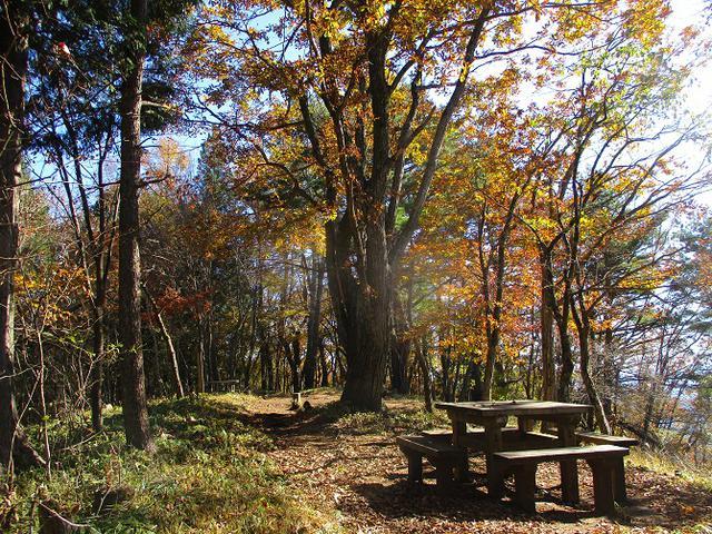 画像8: 11月の山旅会 都民の森から槙寄山 ツアーの下見に行ってきました!