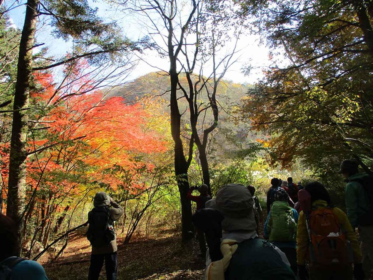 画像4: 岡田ガイドのハイキングコースで 青木ケ原樹海と三湖台 のコースに行ってきました♪