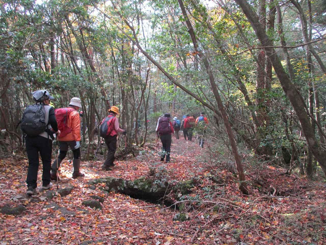 画像3: 岡田ガイドのハイキングコースで 青木ケ原樹海と三湖台 のコースに行ってきました♪
