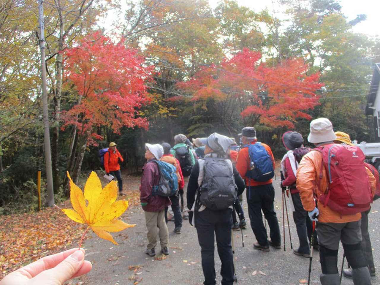 画像1: 岡田ガイドのハイキングコースで 青木ケ原樹海と三湖台 のコースに行ってきました♪