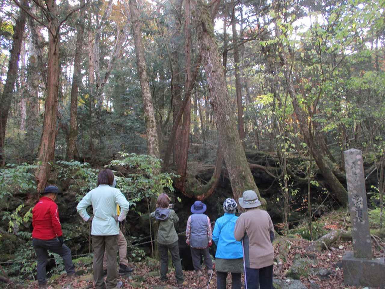 画像6: 岡田ガイドのハイキングコースで 青木ケ原樹海と三湖台 のコースに行ってきました♪