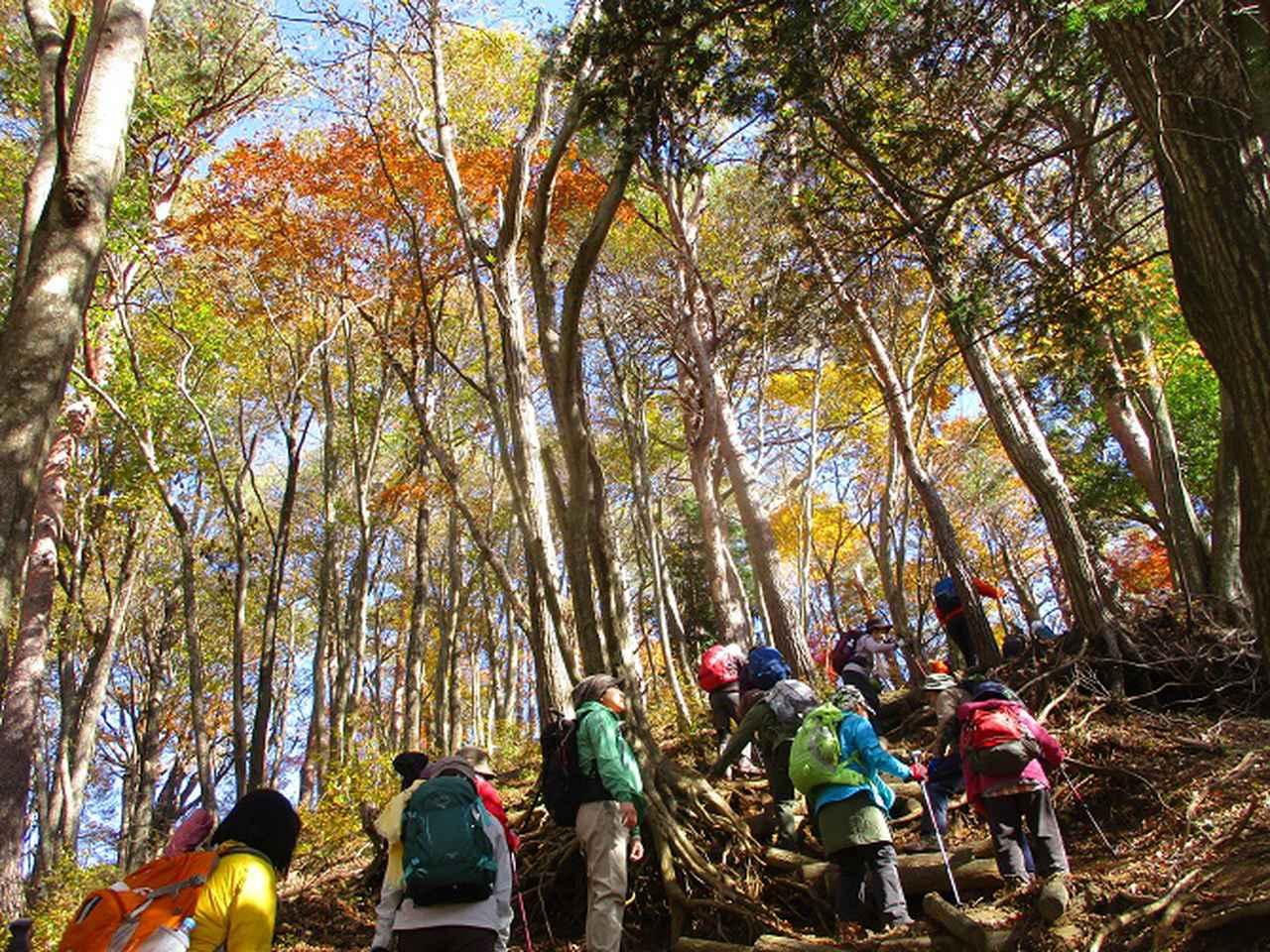 画像7: 岡田ガイドのハイキングコースで 青木ケ原樹海と三湖台 のコースに行ってきました♪