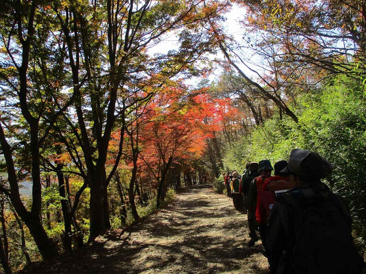 画像11: 岡田ガイドのハイキングコースで 青木ケ原樹海と三湖台 のコースに行ってきました♪