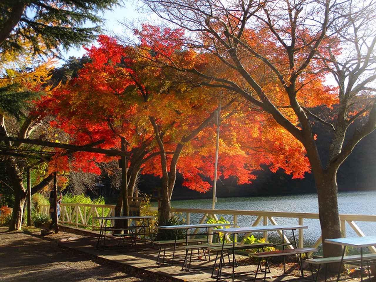 画像10: 11月18日に山旅会 四尾連湖から蛾ヶ岳 ツアーに行ってきました!