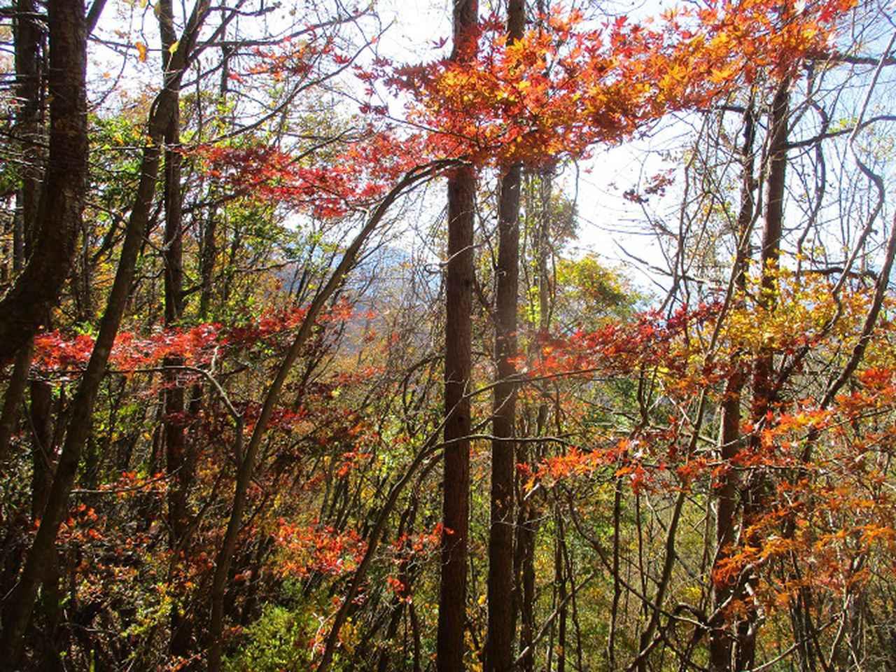 画像1: 11月18日に山旅会 四尾連湖から蛾ヶ岳 ツアーに行ってきました!