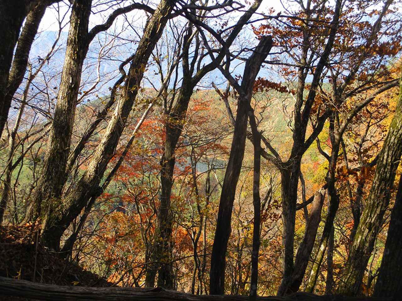 画像3: 11月18日に山旅会 四尾連湖から蛾ヶ岳 ツアーに行ってきました!