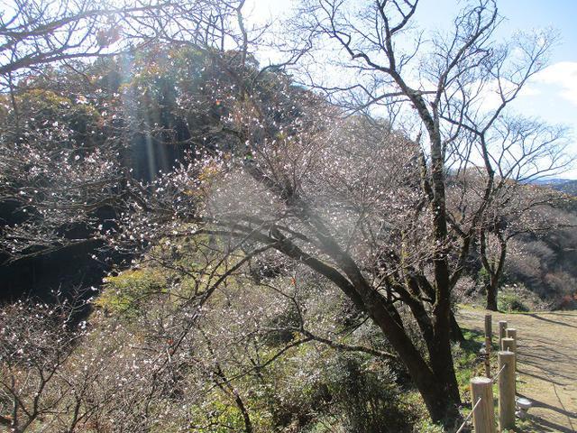 画像6: 12月の山旅会 「鬼石桜山」 ツアーの下見にいってきました!