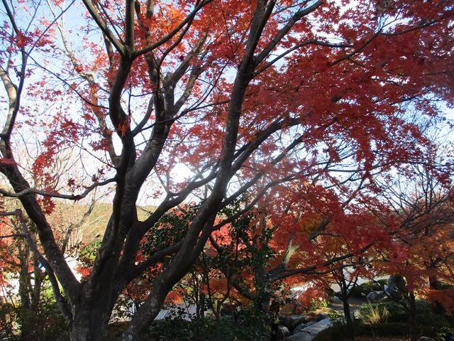 画像5: 12月の山旅会 「鬼石桜山」 ツアーの下見にいってきました!