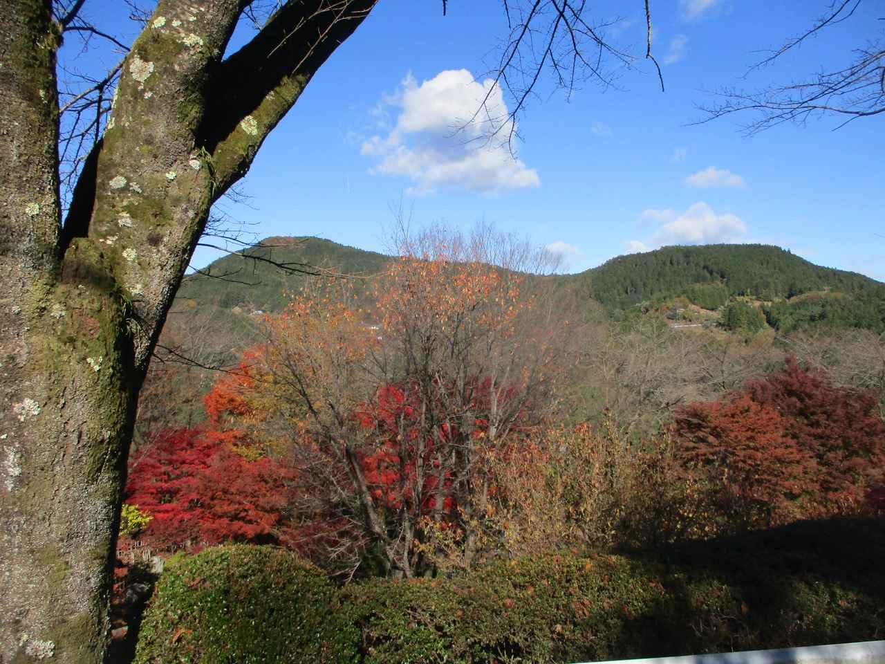 画像4: 12月の山旅会 「鬼石桜山」 ツアーの下見にいってきました!