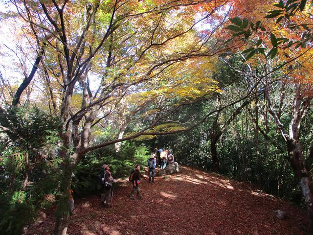 画像1: 11月21日から山旅会 「香嵐渓と鳳来寺山」 ツアーに行ってきました!