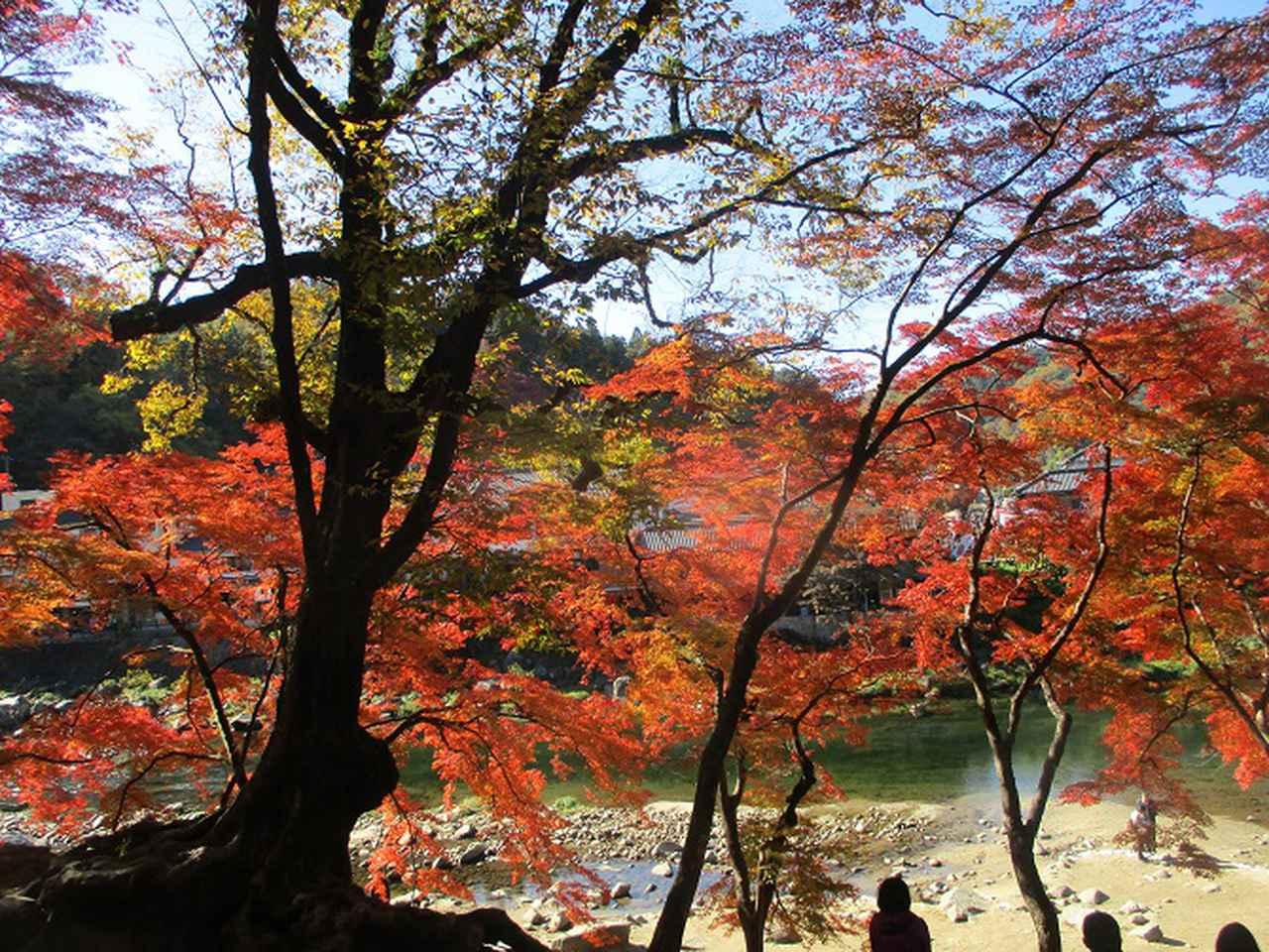 画像3: 11月21日から山旅会 「香嵐渓と鳳来寺」 ツアーに行ってきました!