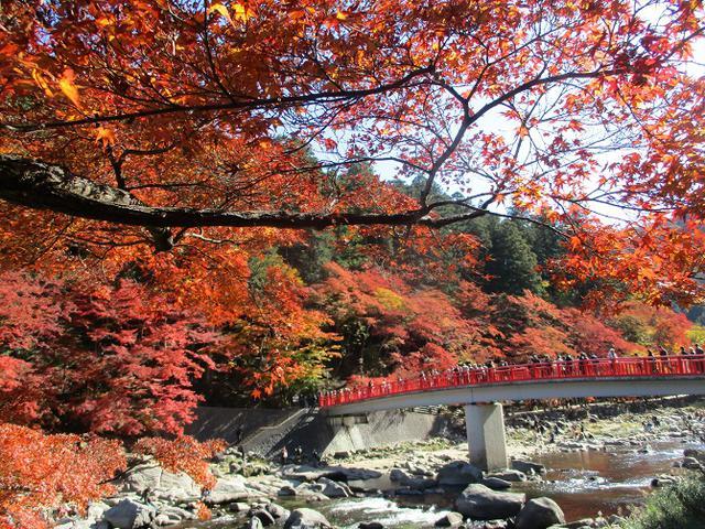 画像2: 11月21日から山旅会 「香嵐渓と鳳来寺」 ツアーに行ってきました!