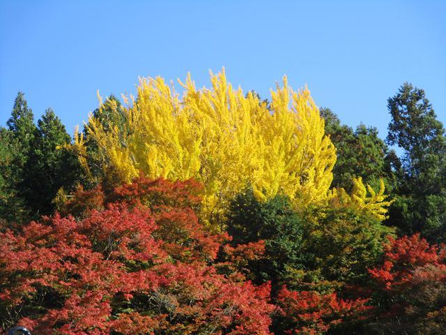 画像3: 11月21日から山旅会 「香嵐渓と鳳来寺山」 ツアーに行ってきました!