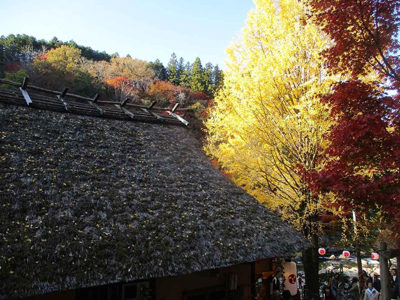 画像7: 11月21日から山旅会 「香嵐渓と鳳来寺山」 ツアーに行ってきました!