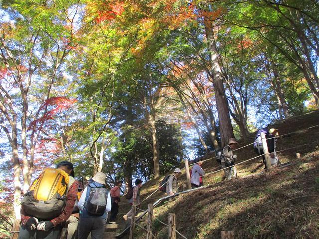画像6: 11月21日から山旅会 「香嵐渓と鳳来寺」 ツアーに行ってきました!
