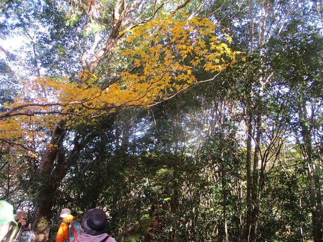 画像2: 11月21日から山旅会 「香嵐渓と鳳来寺山」 ツアーに行ってきました!