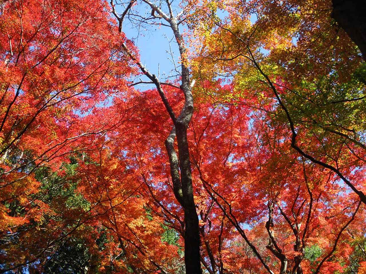 画像7: 11月21日から山旅会 「香嵐渓と鳳来寺」 ツアーに行ってきました!