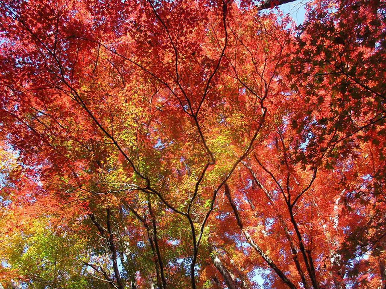 画像8: 11月21日から山旅会 「香嵐渓と鳳来寺」 ツアーに行ってきました!