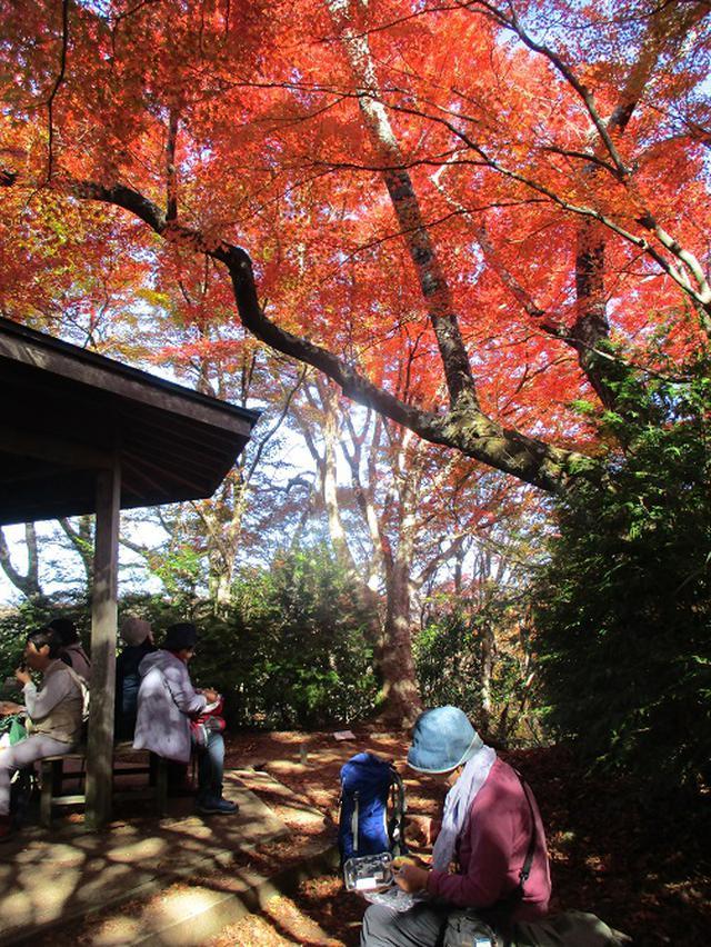 画像9: 11月21日から山旅会 「香嵐渓と鳳来寺」 ツアーに行ってきました!