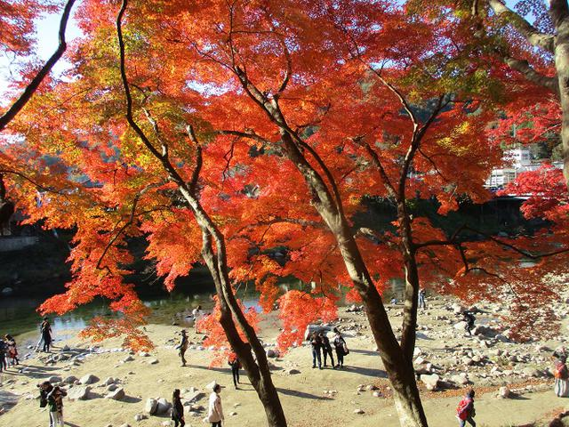 画像8: 11月21日から山旅会 「香嵐渓と鳳来寺山」 ツアーに行ってきました!