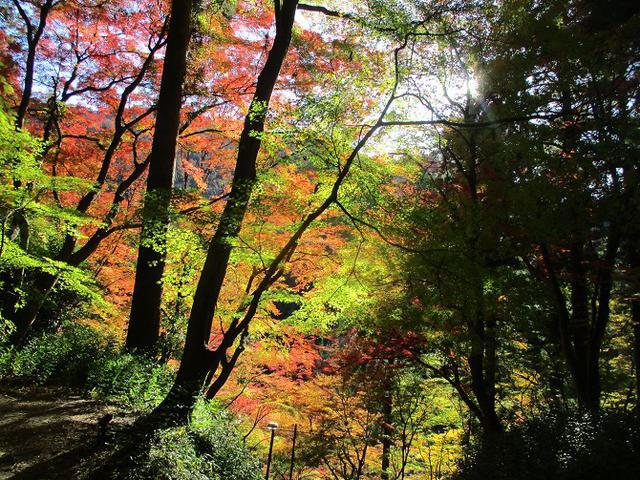 画像6: 11月21日から山旅会 「香嵐渓と鳳来寺山」 ツアーに行ってきました!