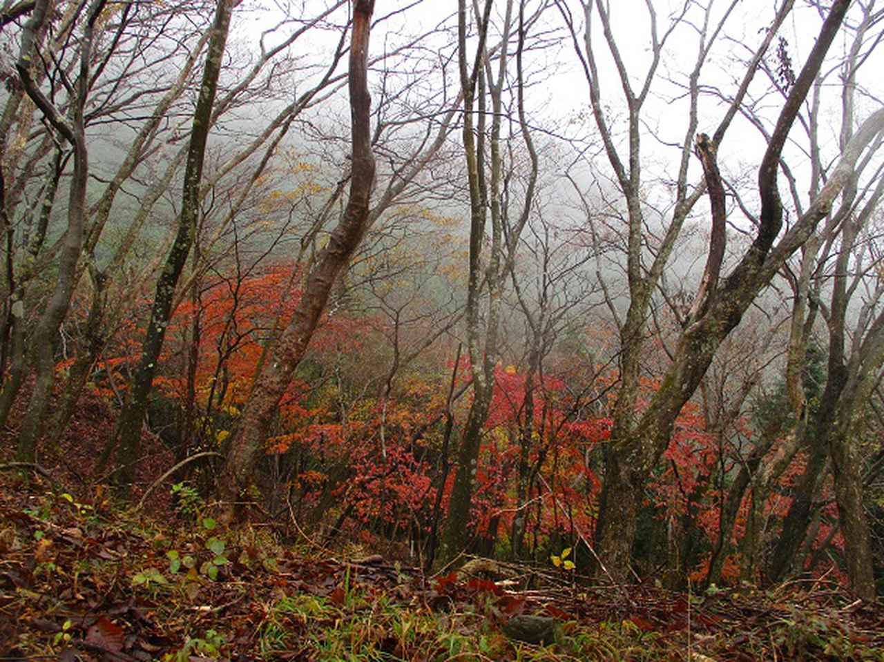 画像3: 12月の山旅会 「三ノ塔尾根」 ツアーの下見にいってきました!
