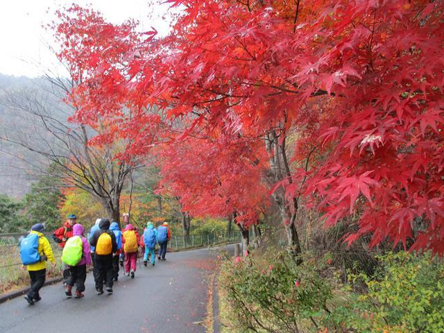 画像2: 11月21~22日に山旅会 「香嵐渓と鳳来寺山」 ツアーに行ってきました!