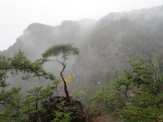 画像13: 11月21~22日に山旅会 「香嵐渓と鳳来寺山」 ツアーに行ってきました!