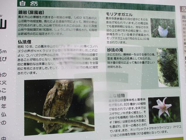 画像12: 11月21~22日に山旅会 「香嵐渓と鳳来寺山」 ツアーに行ってきました!