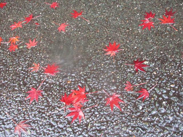 画像14: 11月21~22日に山旅会 「香嵐渓と鳳来寺山」 ツアーに行ってきました!