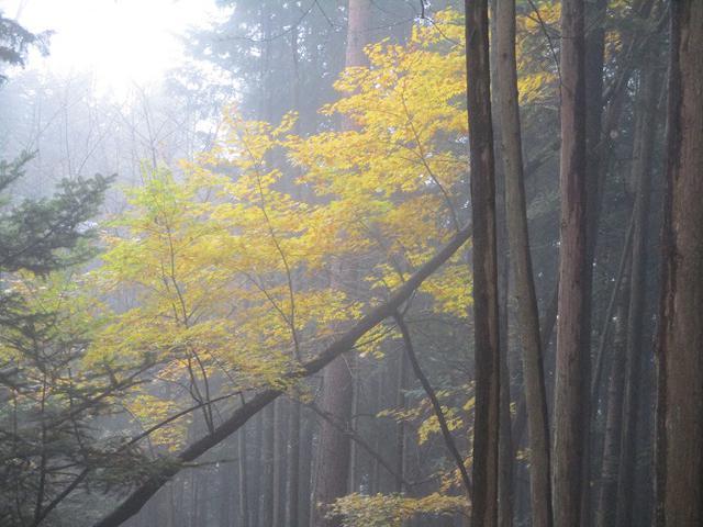 画像10: 【山旅会・登山ガイドこだわりツアー】岡田ガイドからの便り・槙寄山ツアーに行ってきました!