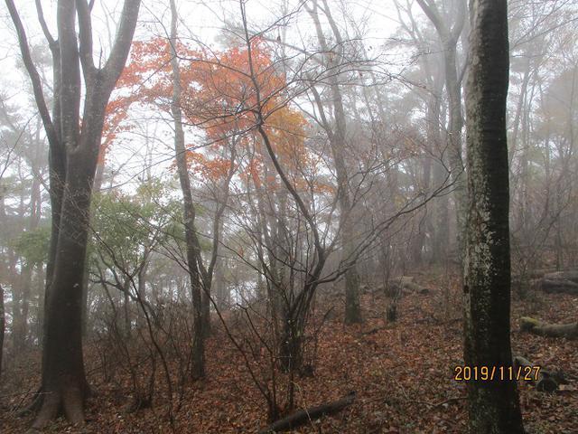 画像6: 11月27日に山旅会 矢倉岳 ツアーに行ってきました!