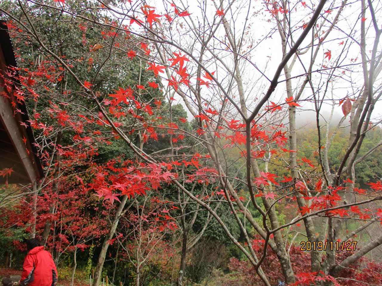 画像11: 11月27日に山旅会 矢倉岳 ツアーに行ってきました!