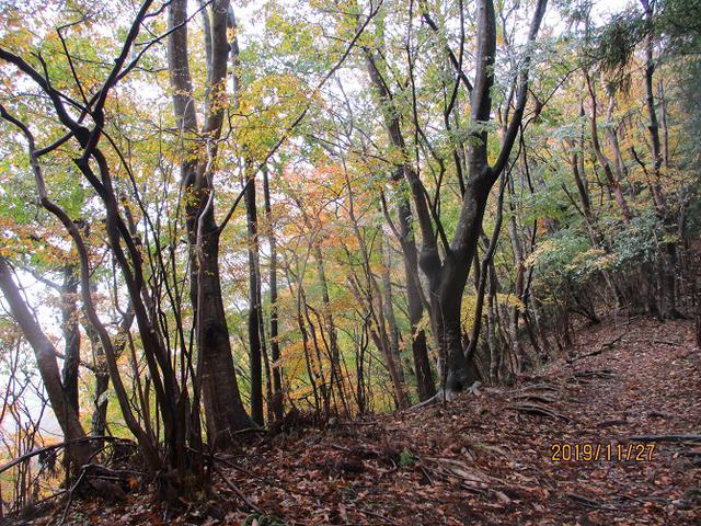 画像4: 11月27日に山旅会 矢倉岳 ツアーに行ってきました!