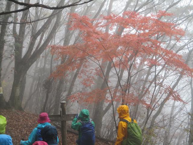 画像9: 【山旅会・登山ガイドこだわりツアー】岡田ガイドからの便り・槙寄山ツアーに行ってきました!
