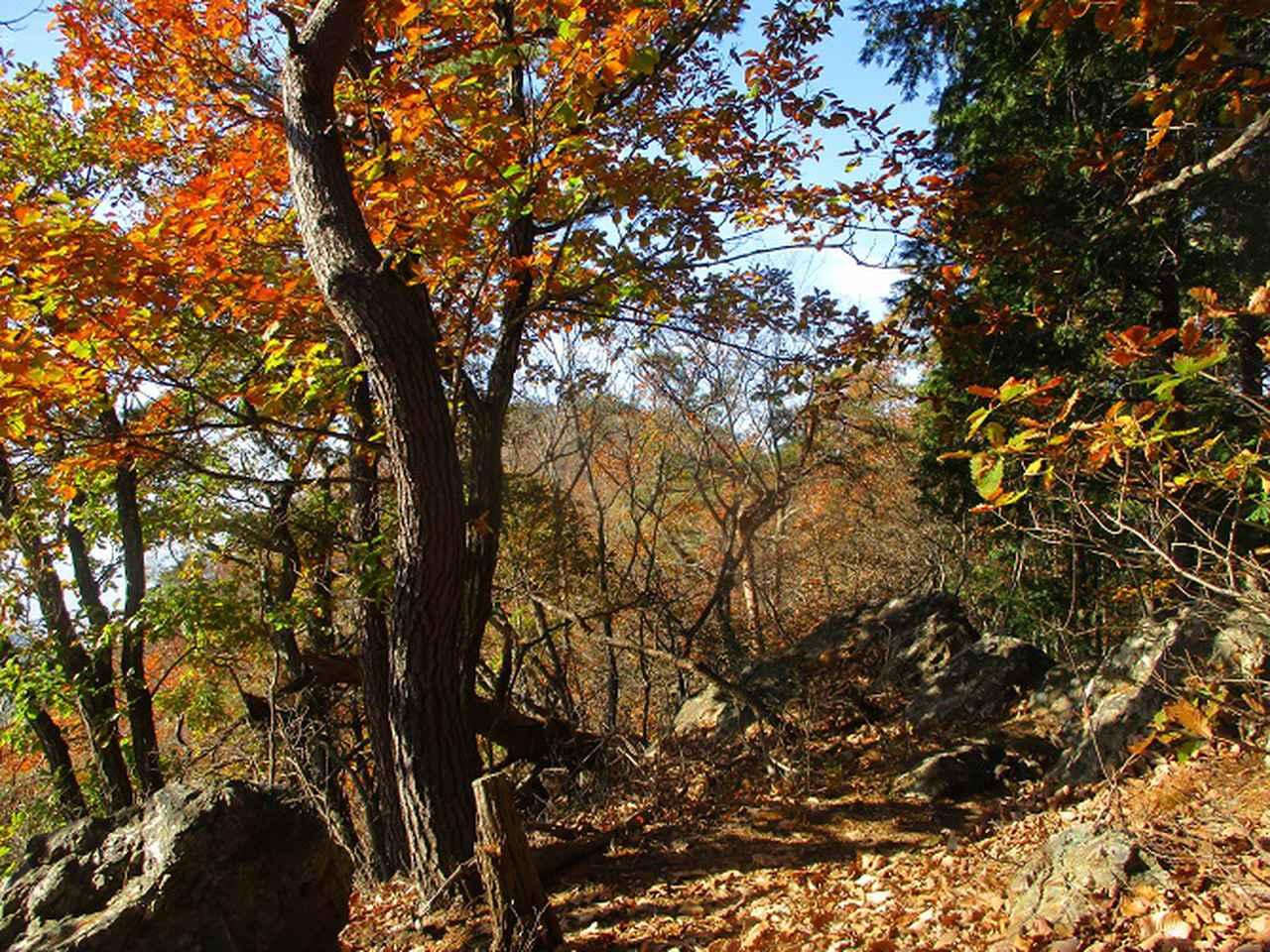 画像5: 12月の山旅会 「深高山から石尊山」 ツアーの下見に行ってきました!