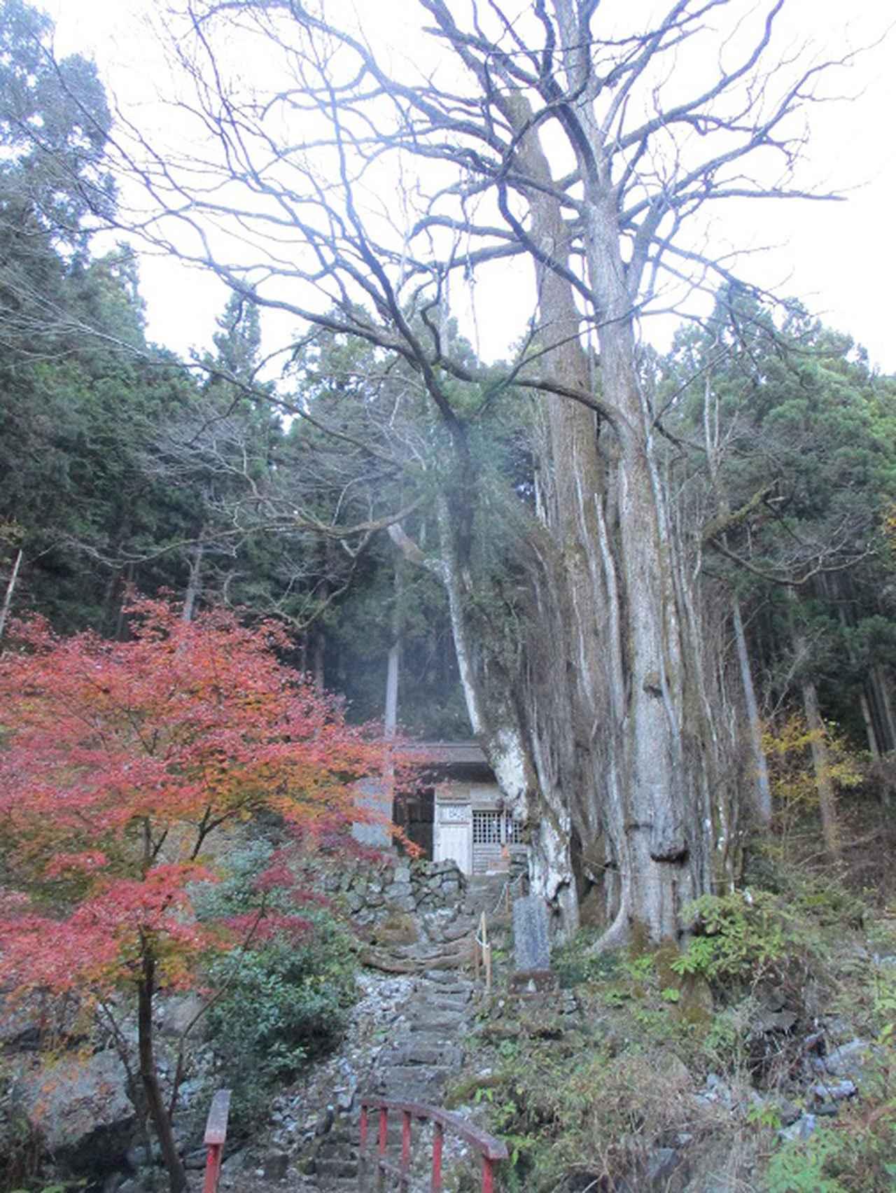 画像2: 12月の山旅会 生藤山 ツアーの下見に行ってきました!