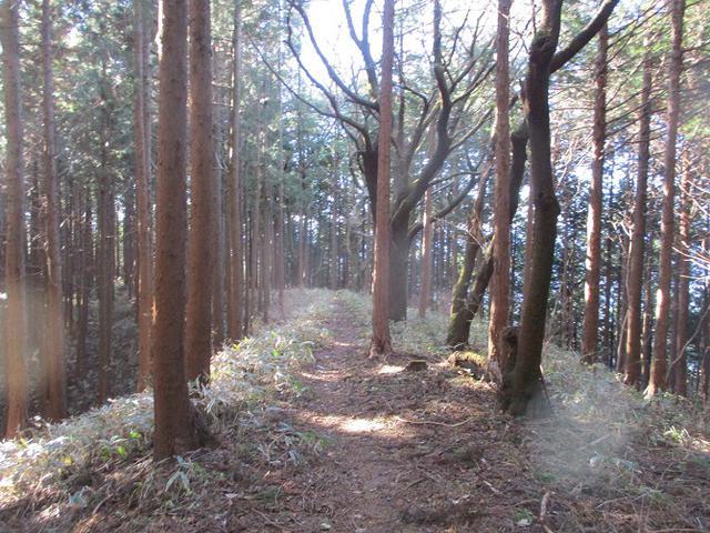 画像10: 12月の山旅会 生藤山 ツアーの下見に行ってきました!
