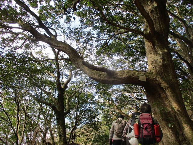 画像4: 12月6日に岡田ガイドのコースで 筑波山 に行ってきました♪