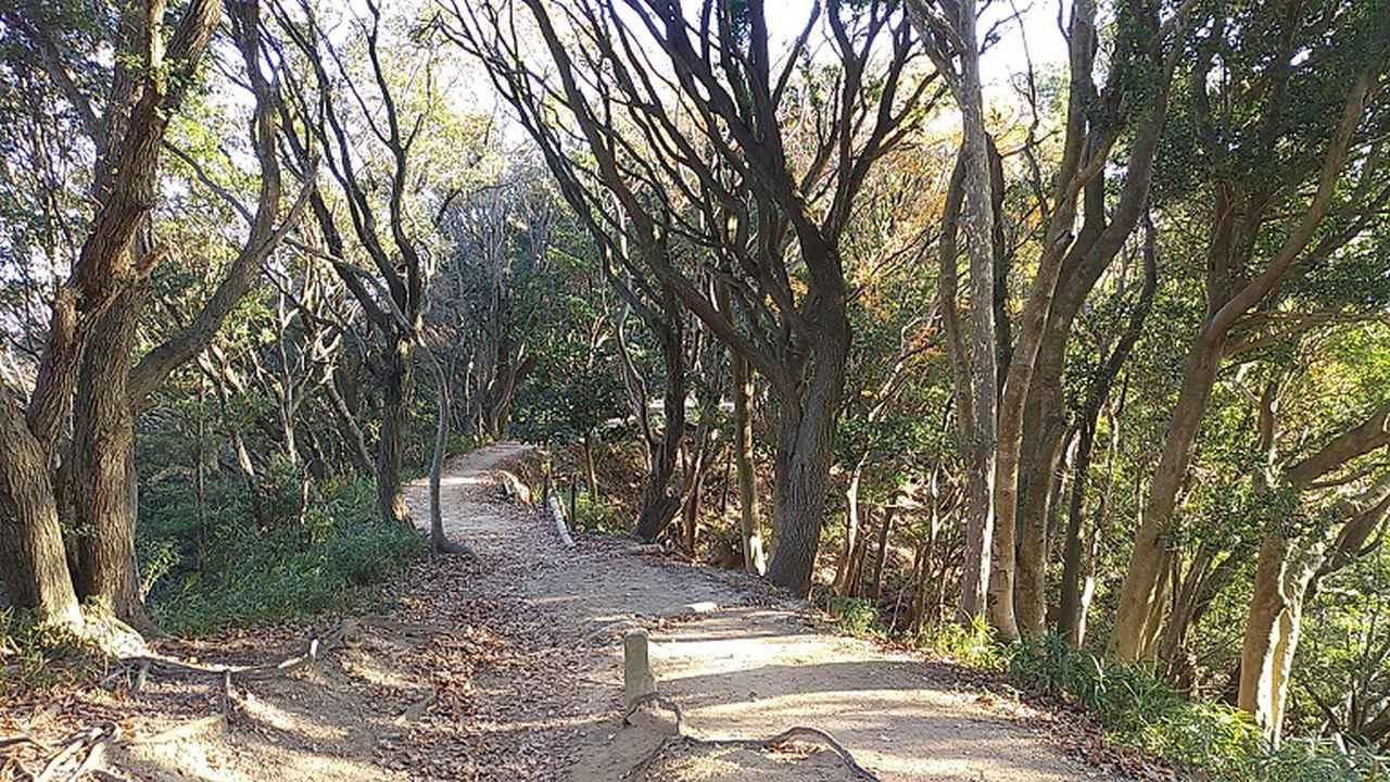 画像5: 来年冬の企画素材を探して神戸の須磨アルプスを歩いてみました!