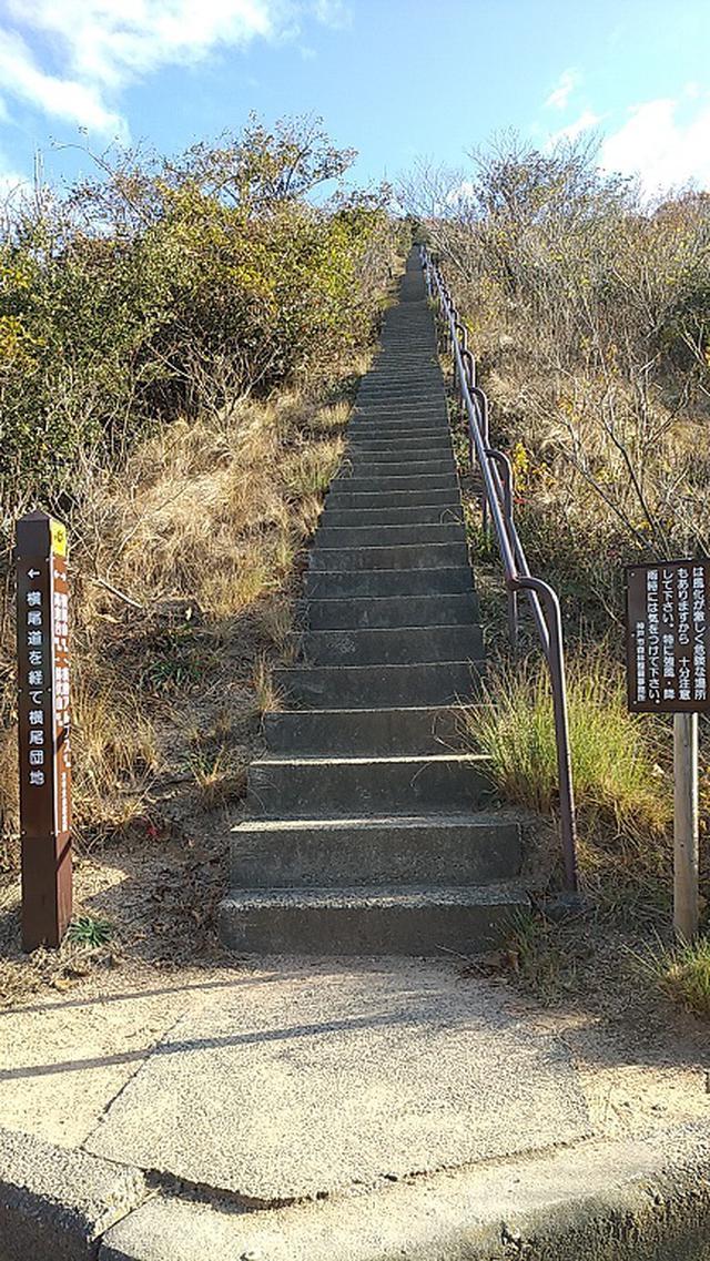 画像8: 来年冬の企画素材を探して神戸の須磨アルプスを歩いてみました!