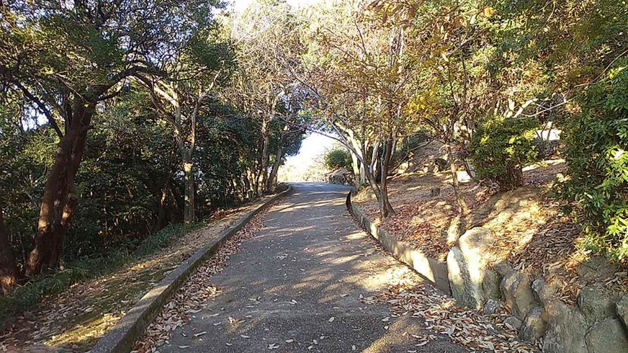 画像2: 来年冬の企画素材を探して神戸の須磨アルプスを歩いてみました!