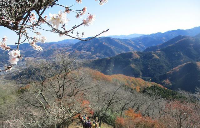 画像12: 12月4日に冬桜で有名なその名も 「桜山」 へ行って来ました♪