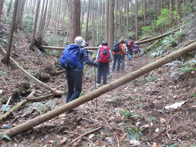 画像1: 12月10日に山旅会 深高山から石尊山 ツアーに行ってきました!