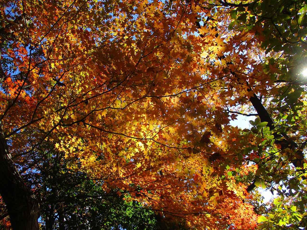 画像3: 12月4日に冬桜で有名なその名も 「桜山」 へ行って来ました♪