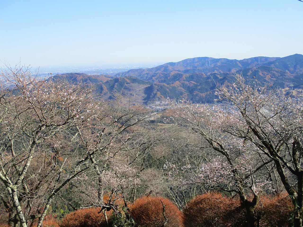 画像10: 12月4日に冬桜で有名なその名も 「桜山」 へ行って来ました♪